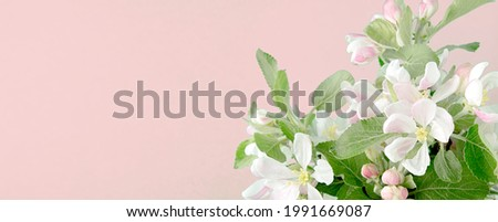 pink background with apple tree flowers