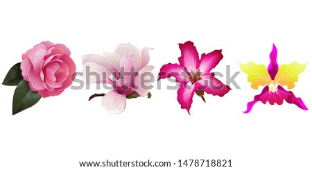 Pink Balsam. Pink Magnolia. Pink Adenium. Pink Orchid. Illustration. Isolated illustration element. Floral botanical flower. Wild leaf wildflower isolated. Exotic tropical hawaiian jungle.