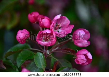 pink blooming apple tree in the spring park #1089283376