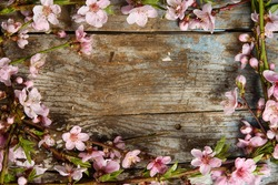 pink Blooming flowers border on grunge wood texture. spring wedding background with copy space. flat lay