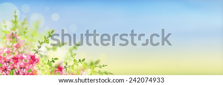 Pink blooming Japanese quince bush on sunny landscape background with bokeh, banner for website