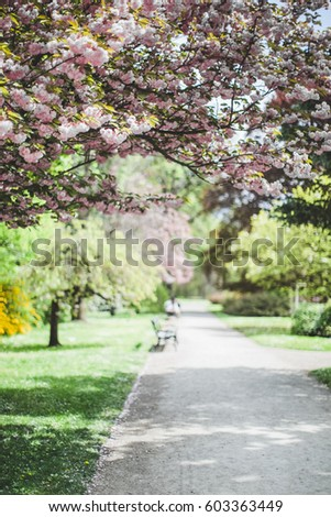 Pink blooming trees in the park in summer on a sunny day - Shutterstock ID 603363449