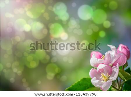 Pink blossom