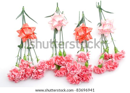 Pink carnation on a white background