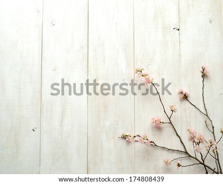 Pink cherry blossoms on white wooden wall.image of spring flower.