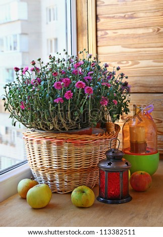 Pink chrysanthemum apples and a lantern on a balcony