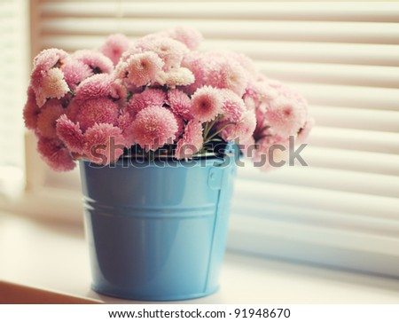 pink chrysanthemums in a blue bucket