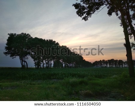 Pink cloud sunset over corn field and grass with trees, summer evening lanscape, shadow trees.