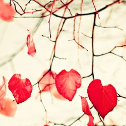 Pink coral autumn leafs over sepia vintage background