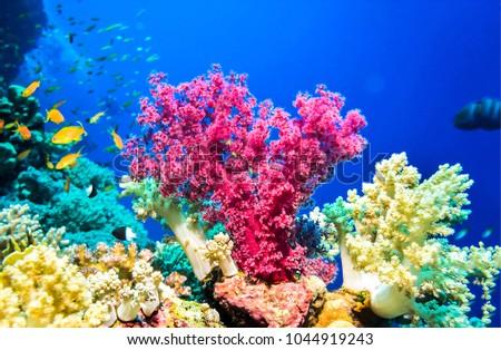 Pink coral underwater landscape #1044919243