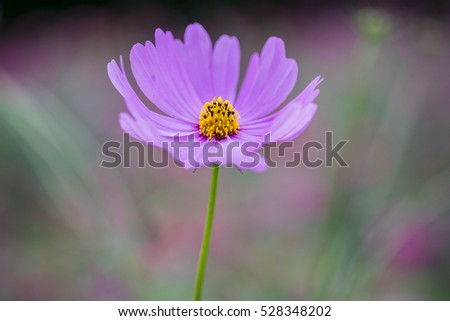 Pink cosmo flower ez canvas pink cosmo flower mightylinksfo