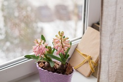 pink delicate hyacinths in the planters by the window