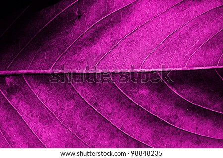 Pink dried leaf texture.