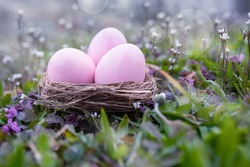 Pink easter eggs and purple flowers in a spring meadow. Easter decoration in natur with bright bokeh. Close up with short depth of focus.