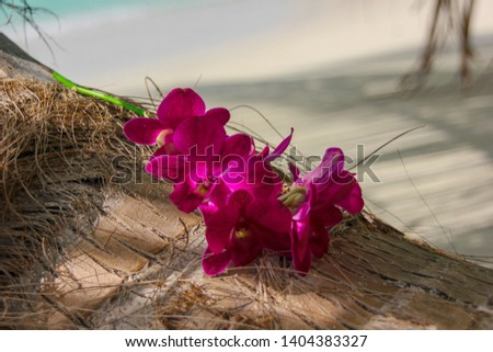 Pink exotic frangipany's flowers  on a palm tree  closeup on beach of tropical island .Tropical beach background. #1404383327