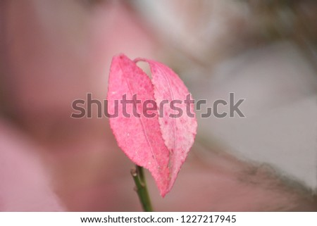Pink Fall Leaves #1227217945