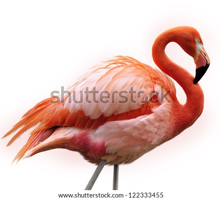 Pink Flamingo Bird On White Background