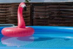 Pink Flamingo in Swimmingpool Garden