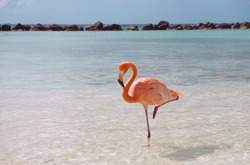 Pink flamingo standing in one leg