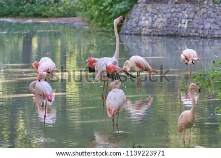 Pink flamingos. Birds. #1139223971