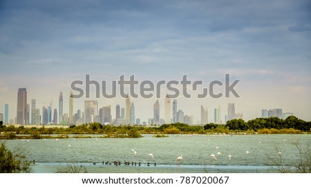 Pink flamingos on a lake in Ras al Khor Wildlife Sanctuary with downtown Dubai skyline in the backdrop
