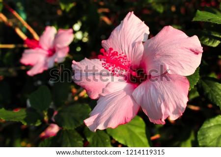 pink flora, green flora #1214119315