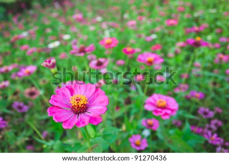 pink floral garden as background - stock photo