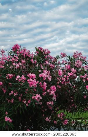 Pink flower and blue sky. Baku Azerbaijan. Heydar Aliyev Center Park.