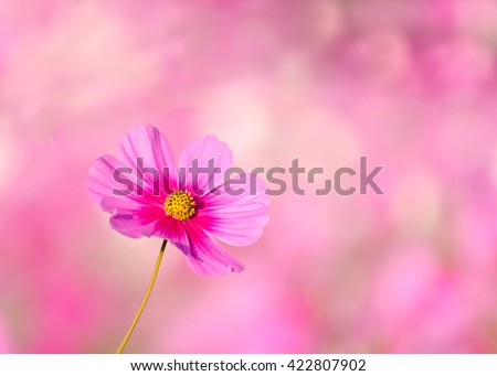 pink flower and fresh in garden at my home #422807902