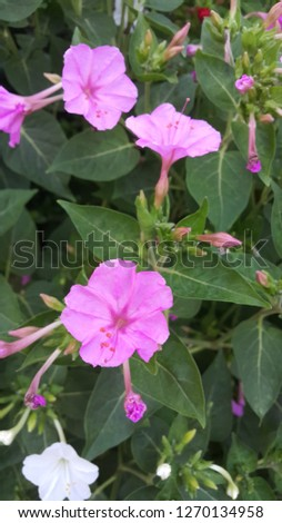 Pink flower and green leaf background #1270134958