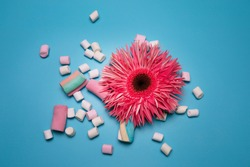 Pink flower and marshmallows on the blue background.