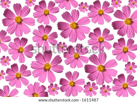 Pink flower background - stock photo