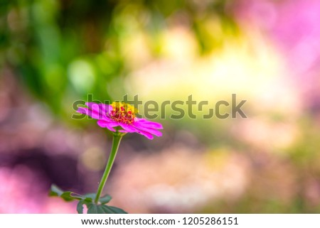 Pink flower blooming in the garden, colorful bokeh background. #1205286151