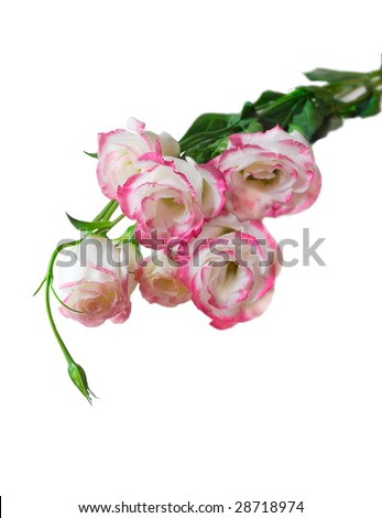 pink flower bouquet isolated on white background