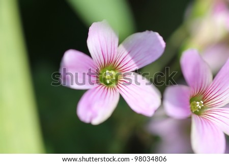 Pink flower field,high angle view