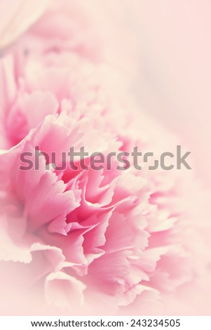 Pink flower for romantic background in soft background concept