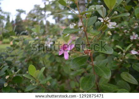 Pink flower in focus #1292875471