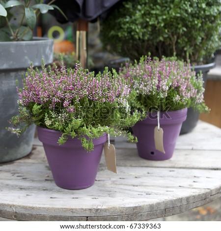 pink flower in pot near flower shop