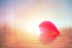 Pink flower in water and  reflection of pastel background. Flower heart shape