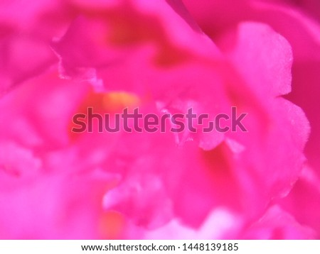 pink flower photos from close range  #1448139185