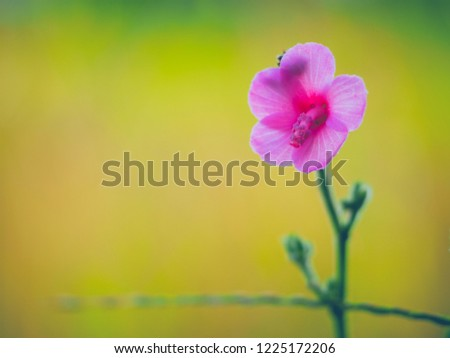 Pink flower with blur yellow green background. #1225172206