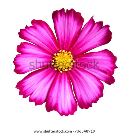 Pink flower with yellow center on white background ez canvas pink flower with yellow center on white background mightylinksfo