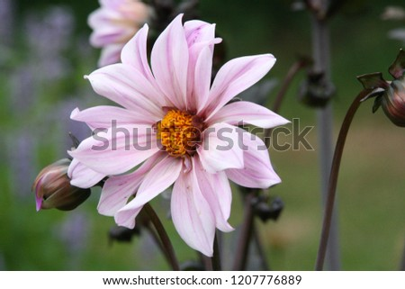 Pink flower with yellow heart pastel #1207776889