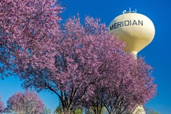 Pink flowering trees and yellow water tower in Meridian Idaho