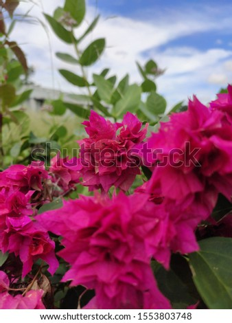 pink flowers a beautiful shot a realistic pic