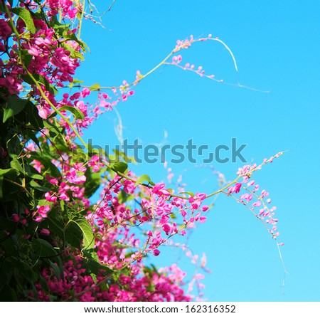 pink flowers against blue sky #162316352