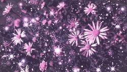 Pink flowers against sparkling background. Pink sparkles background. Pink floral background. Pink flowers background.