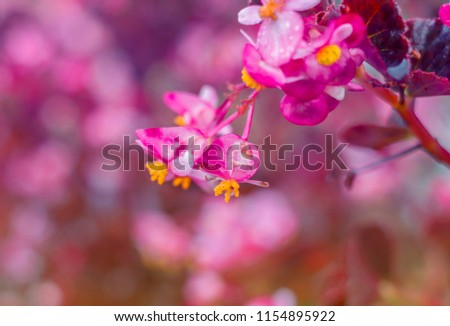 pink flowers are blooming