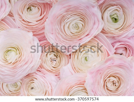 Pink Flowers.Background of delicate pink flowers.