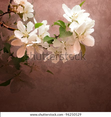 pink flowers blossoming tree branch on dark grunge textured background